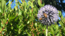 Planting for Bees: Sustainable & Bee-utiful Landscapes – Board & Vellum